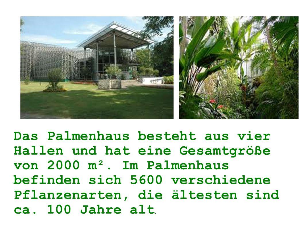Das Palmenhaus besteht aus vier Hallen und hat eine Gesamtgröße von 2000 m².