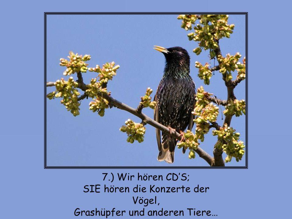 SIE hören die Konzerte der Vögel, Grashüpfer und anderen Tiere…