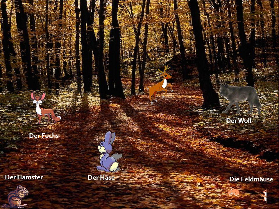 Der Wolf Der Fuchs Der Hamster Der Hase Die Feldmäuse
