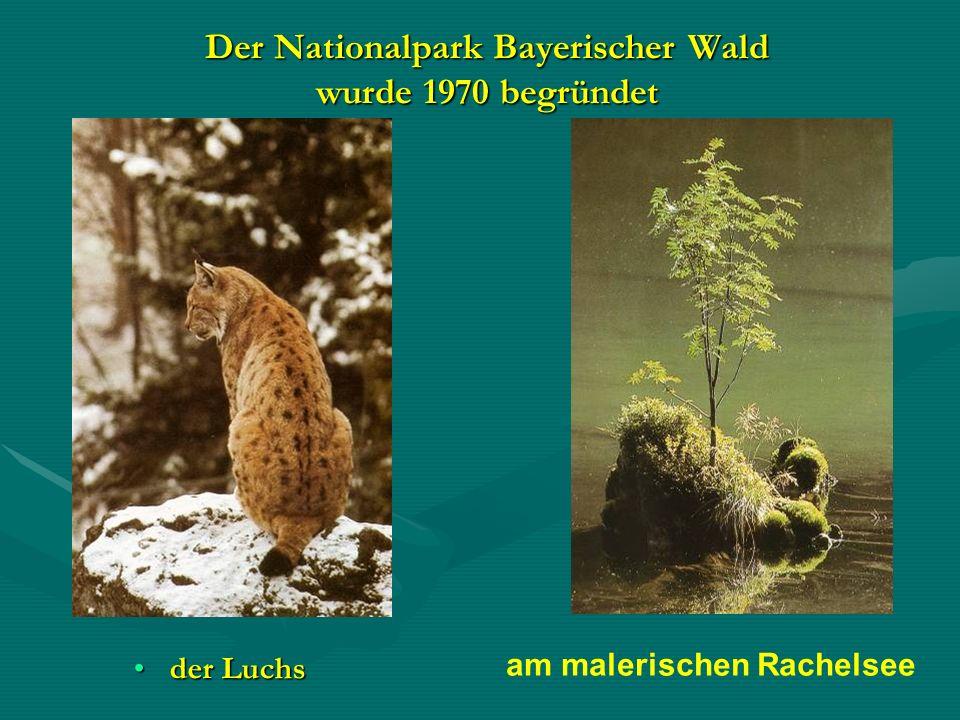 Der Nationalpark Bayerischer Wald wurde 1970 begründet