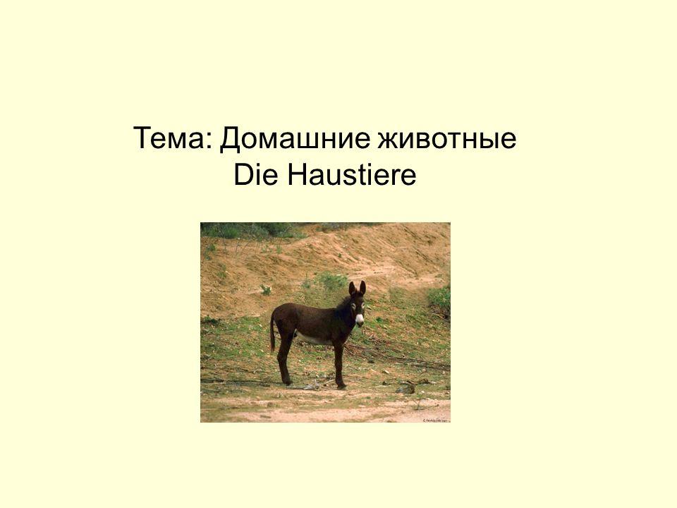 Тема: Домашние животные