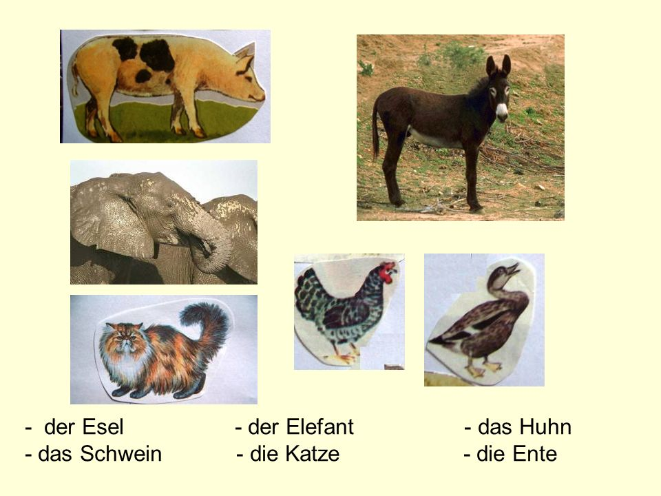 - der Esel - der Elefant - das Huhn