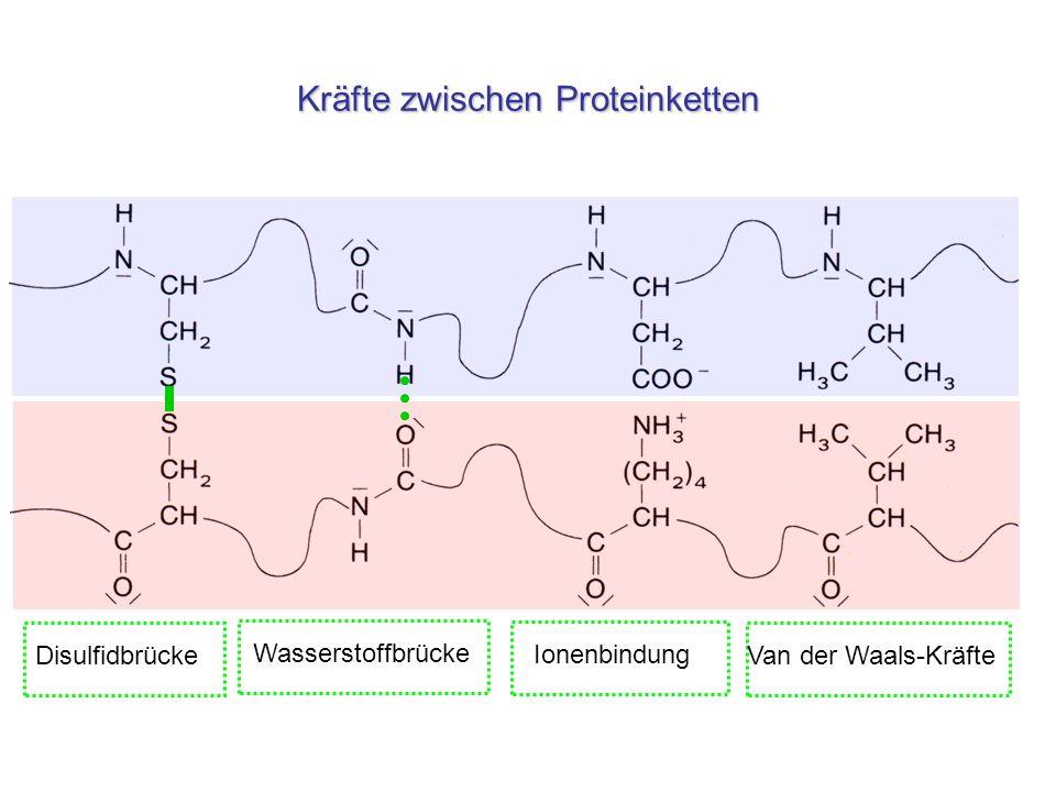 Kräfte zwischen Proteinketten