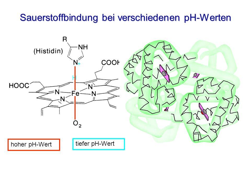 Sauerstoffbindung bei verschiedenen pH-Werten