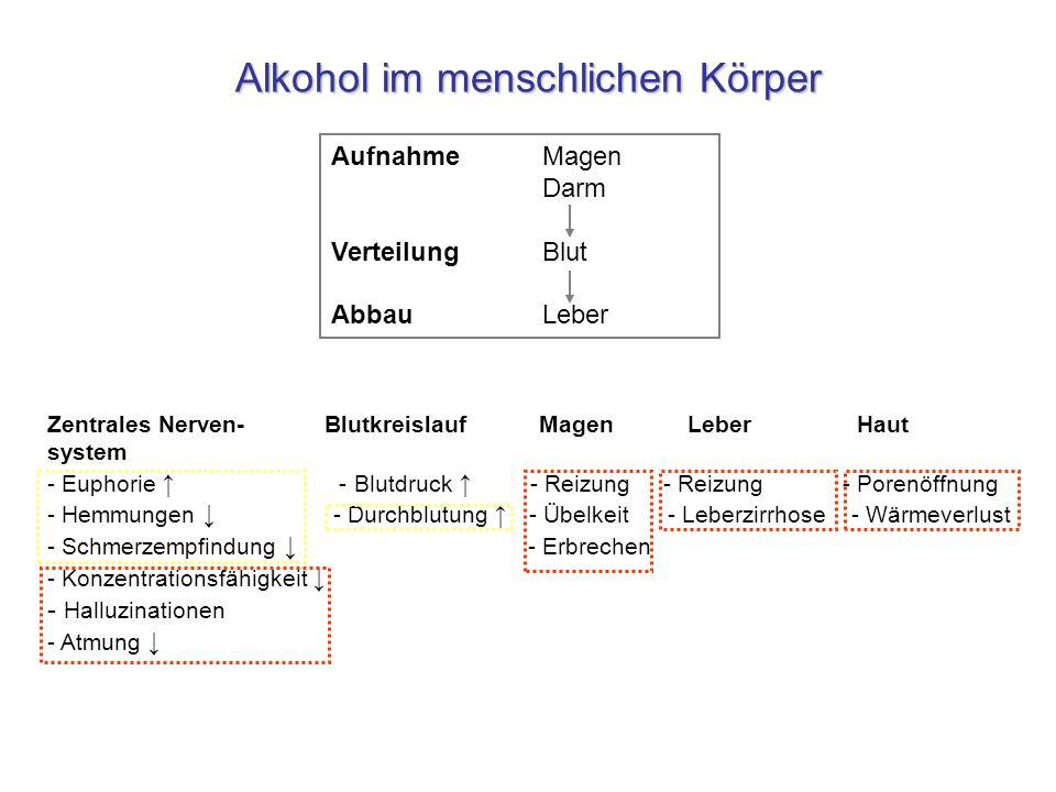 Alkohol im menschlichen Körper