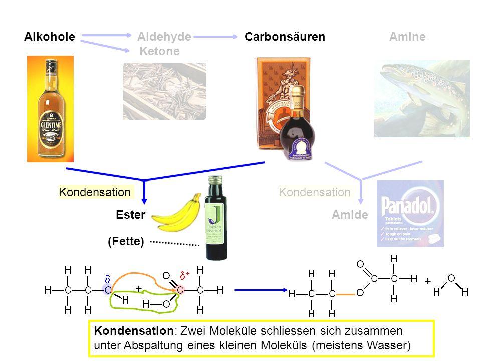 Alkohole Aldehyde. Carbonsäuren. Amine. Ketone. Kondensation. Amide. Kondensation. Ester. (Fette)