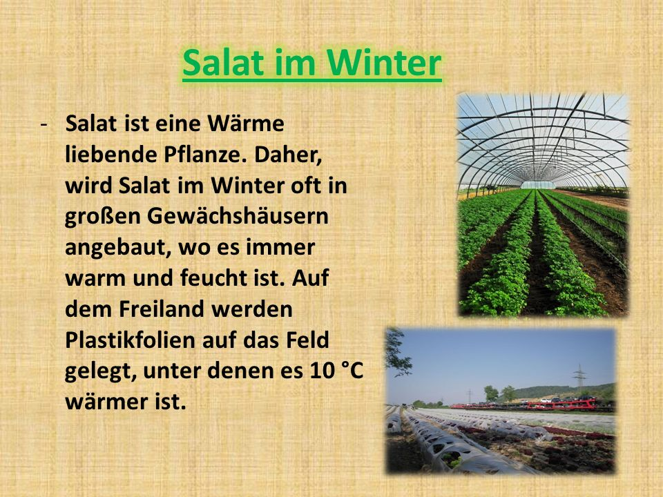 Salat im Winter