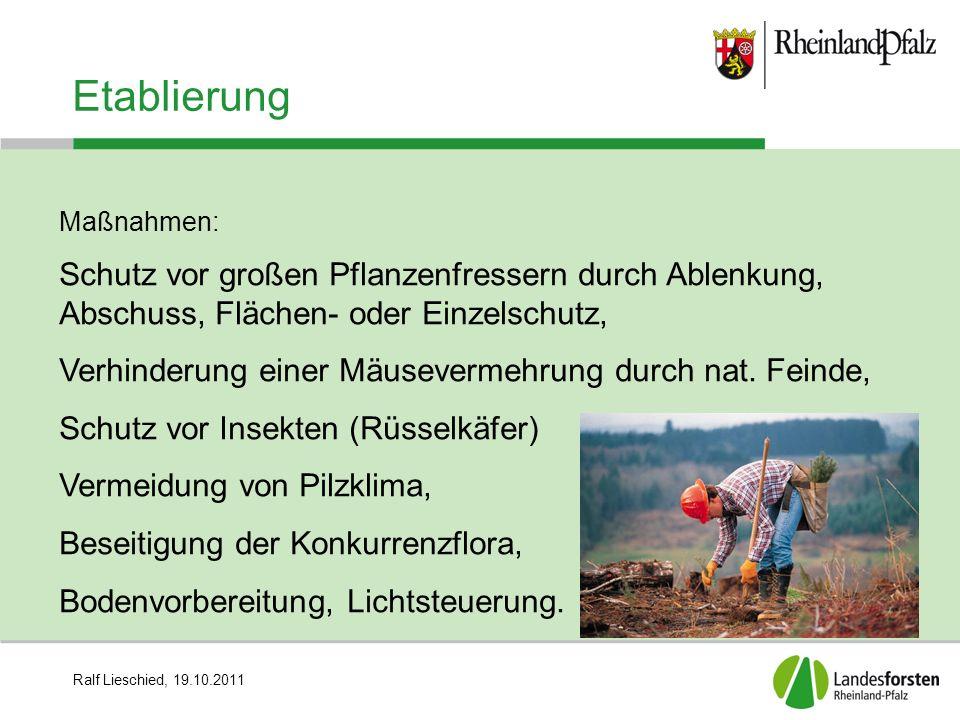 Etablierung Maßnahmen: Schutz vor großen Pflanzenfressern durch Ablenkung, Abschuss, Flächen- oder Einzelschutz,