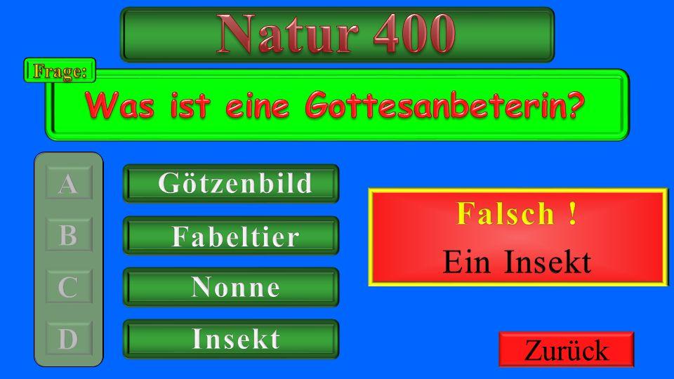 Natur 400 Richtig ! Was ist eine Gottesanbeterin Falsch ! Ein Insekt