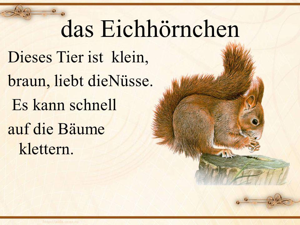 das Eichhörnchen Dieses Tier ist klein, braun, liebt dieNüsse.