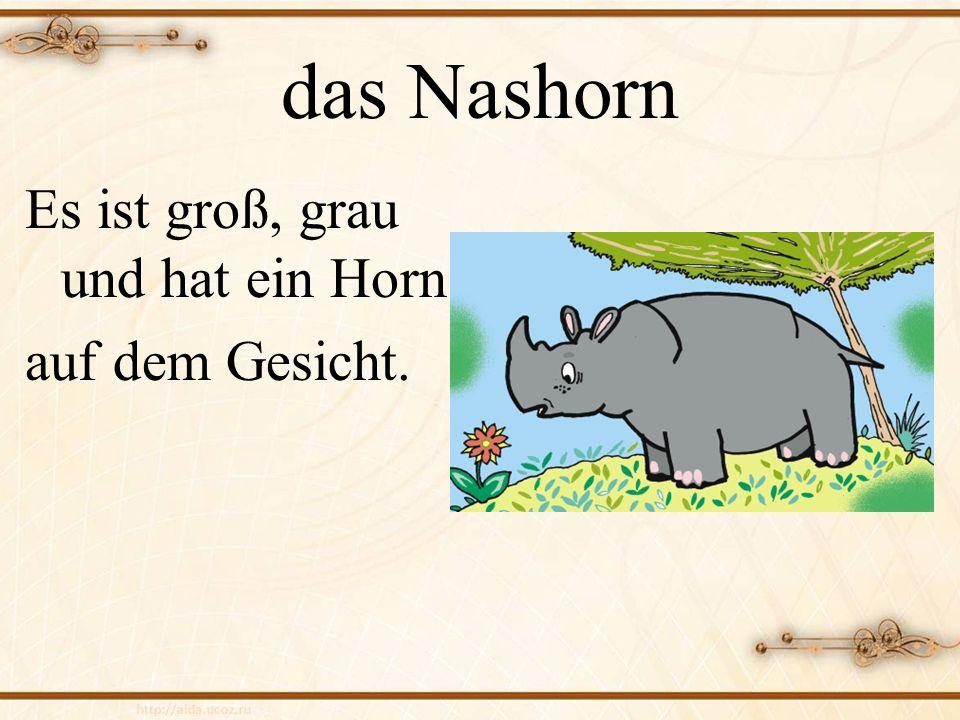 das Nashorn Es ist groß, grau und hat ein Horn auf dem Gesicht.