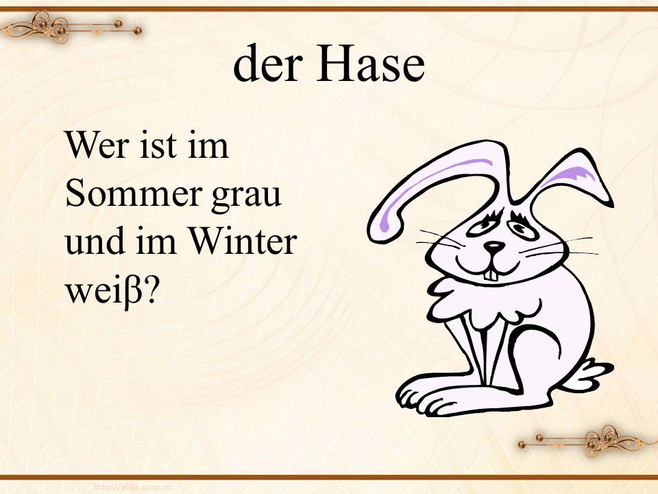 der Hase Wer ist im Sommer grau und im Winter weiβ