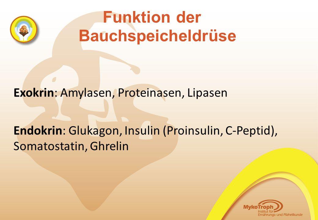 Funktion der Bauchspeicheldrüse