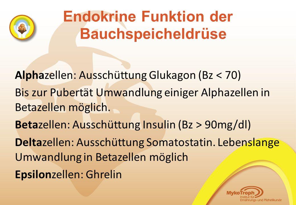 Endokrine Funktion der Bauchspeicheldrüse