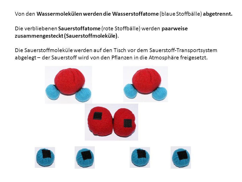 Von den Wassermolekülen werden die Wasserstoffatome (blaue Stoffbälle) abgetrennt.