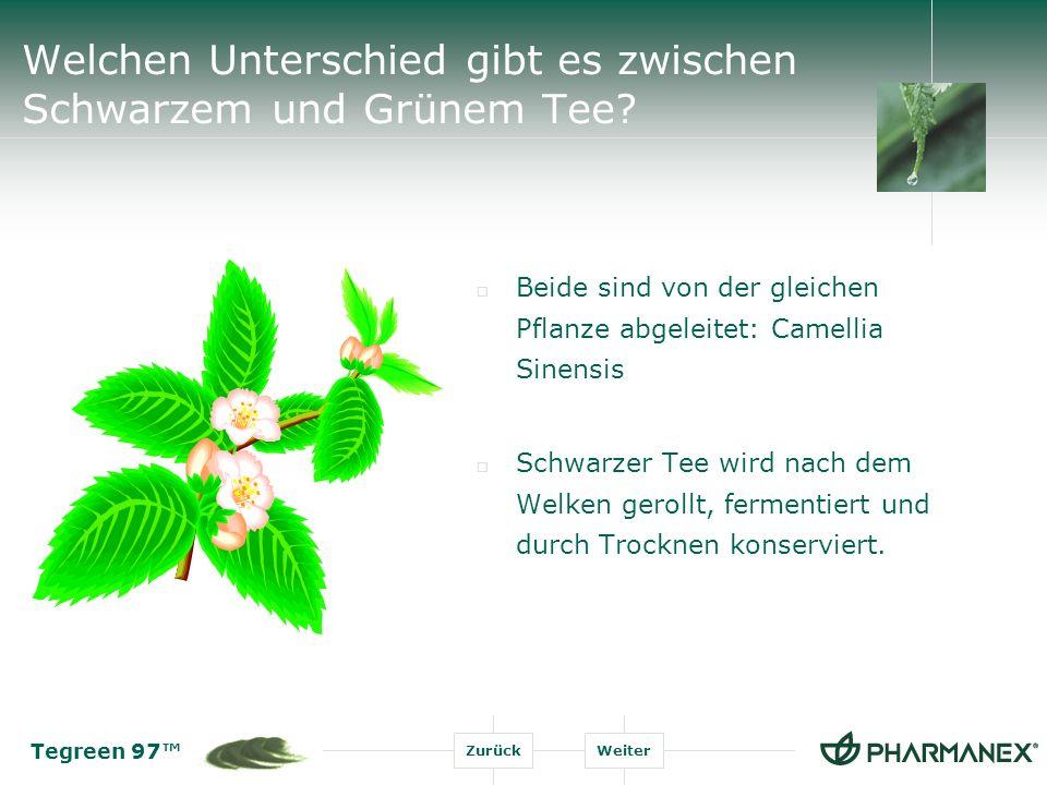 Welchen Unterschied gibt es zwischen Schwarzem und Grünem Tee
