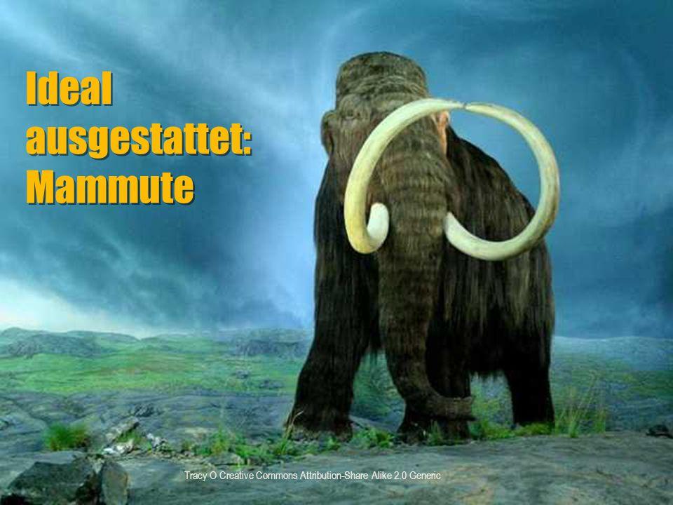 Ideal ausgestattet: Mammute