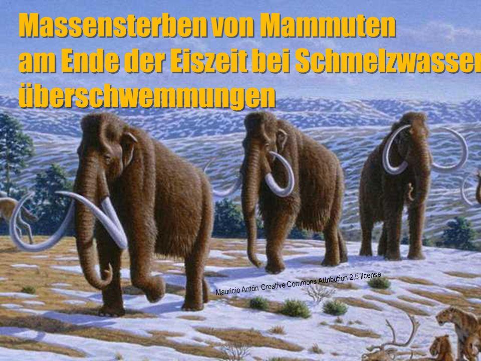 Massensterben von Mammuten am Ende der Eiszeit bei Schmelzwasser-überschwemmungen