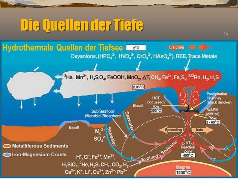 Die Quellen der Tiefe FB Hydrothermale Quellen der Tiefsee