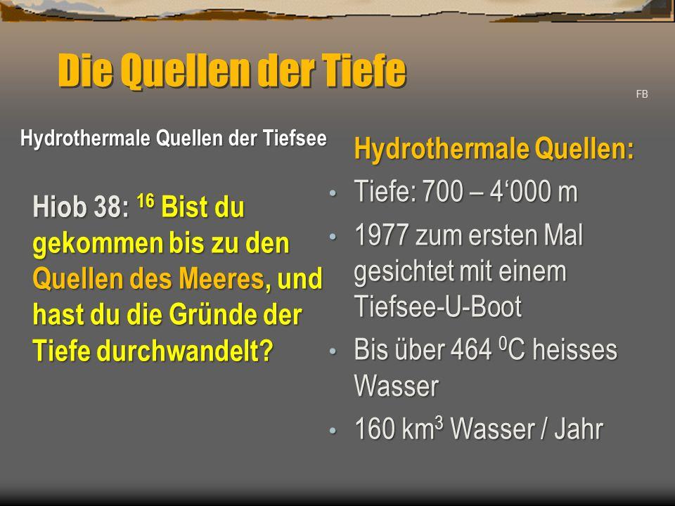 Die Quellen der Tiefe Hydrothermale Quellen: Tiefe: 700 – 4'000 m