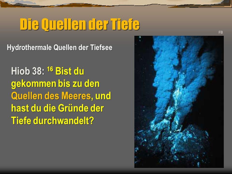 Die Quellen der Tiefe FB. Hydrothermale Quellen der Tiefsee.