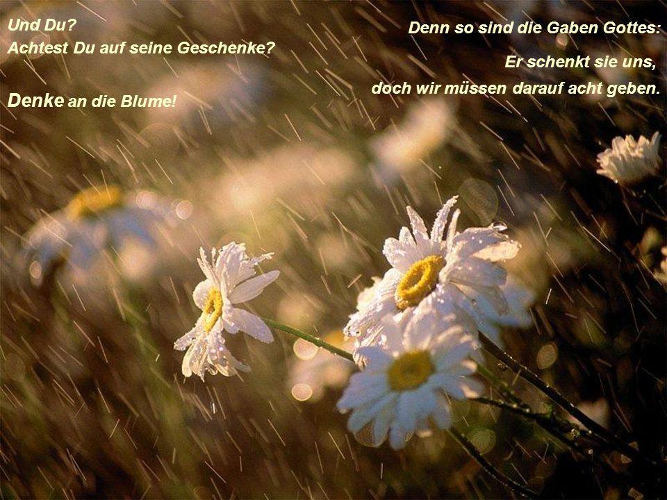 Denke an die Blume! Und Du Denn so sind die Gaben Gottes: