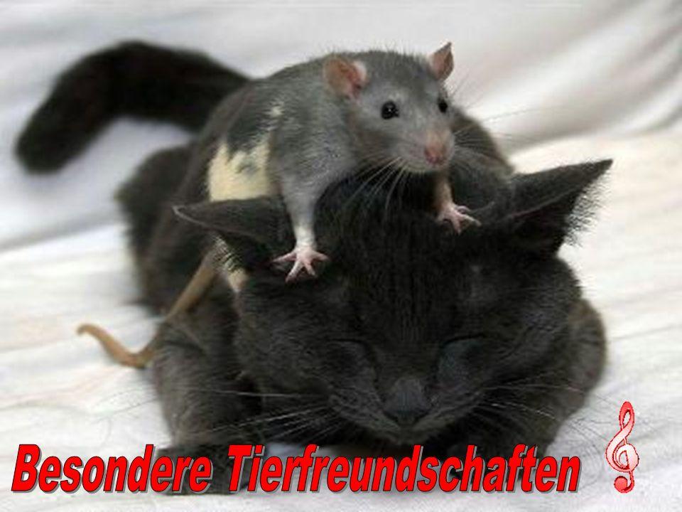 Besondere Tierfreundschaften