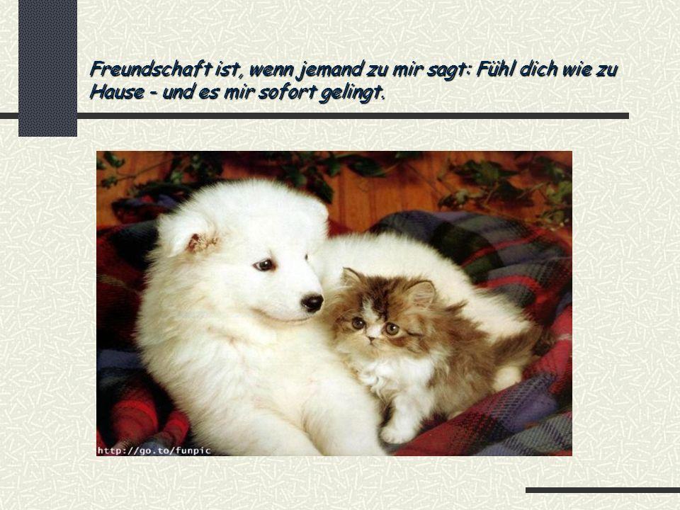 Freundschaft ist, wenn jemand zu mir sagt: Fühl dich wie zu Hause - und es mir sofort gelingt.