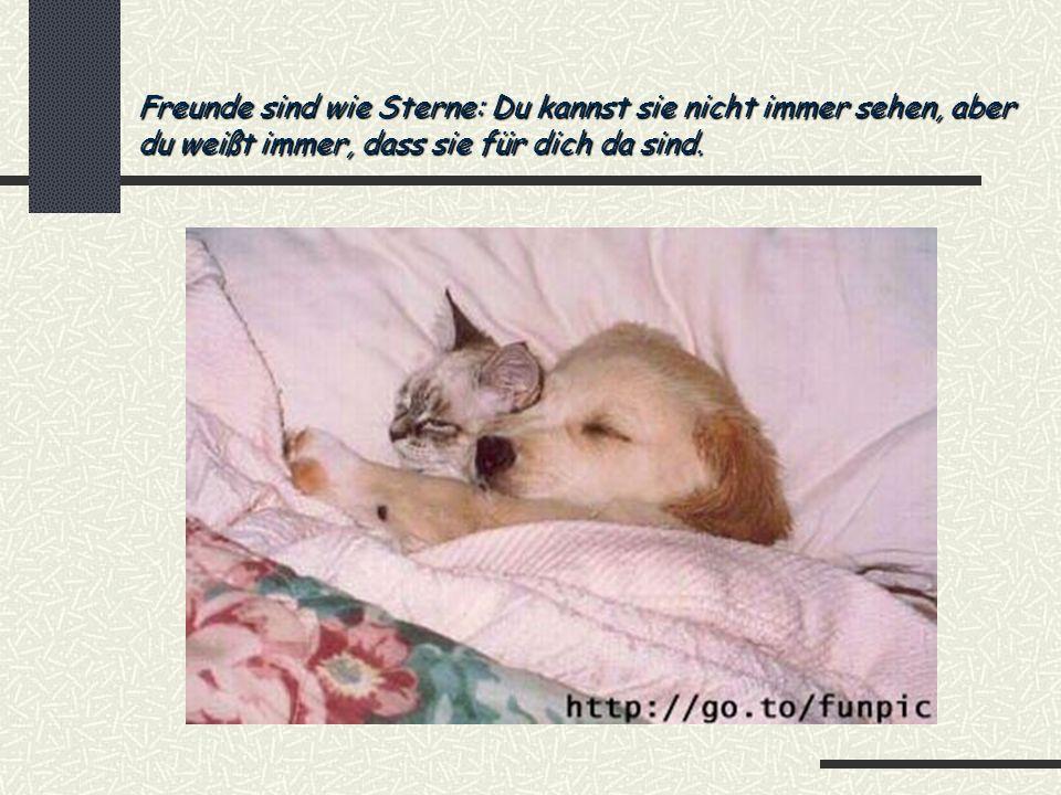 Freunde sind wie Sterne: Du kannst sie nicht immer sehen, aber du weißt immer, dass sie für dich da sind.