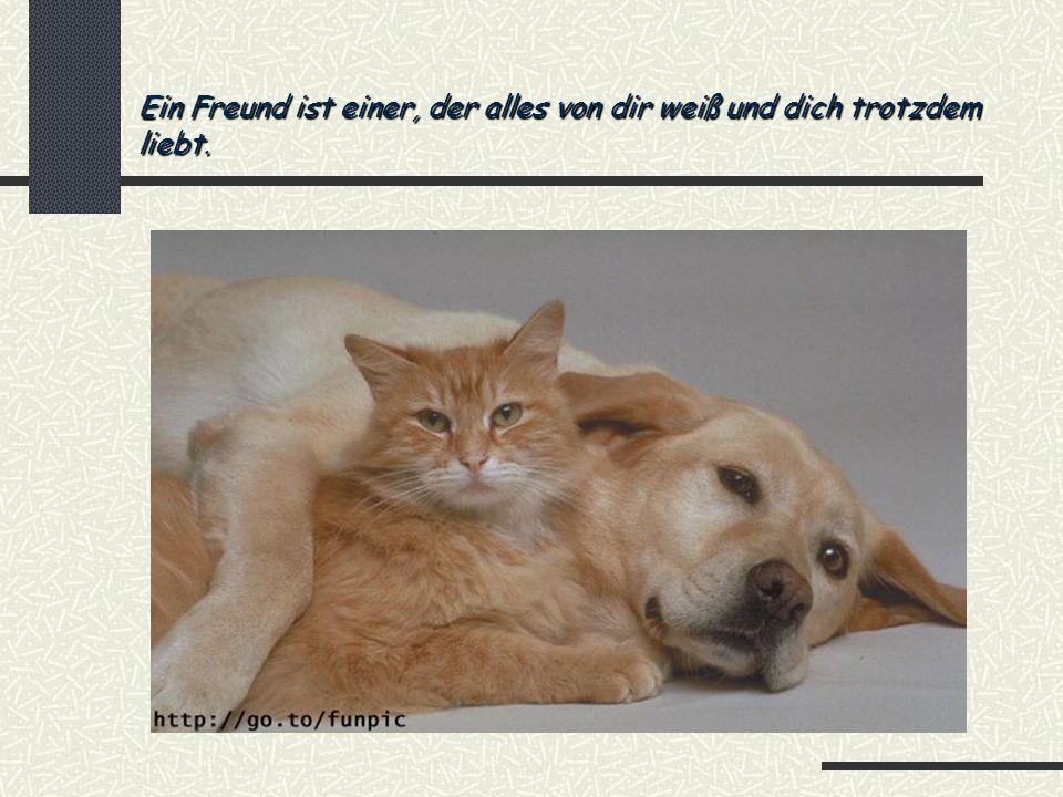 Ein Freund ist einer, der alles von dir weiß und dich trotzdem liebt.
