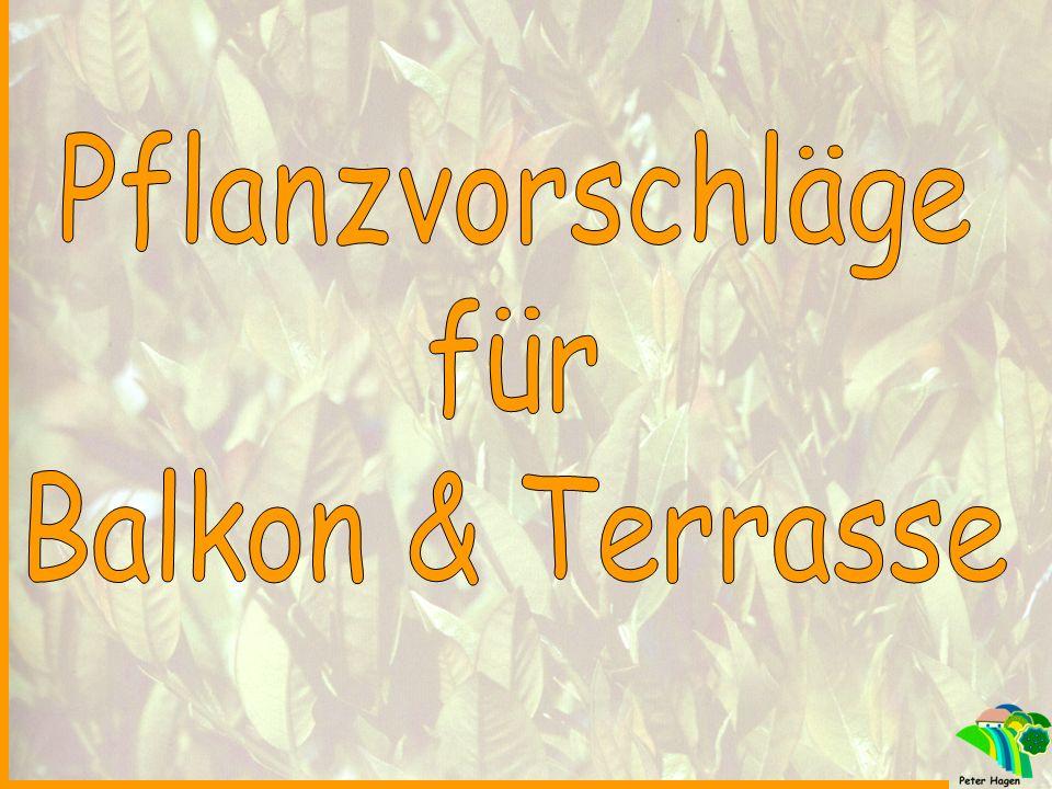 Pflanzvorschläge für Balkon & Terrasse