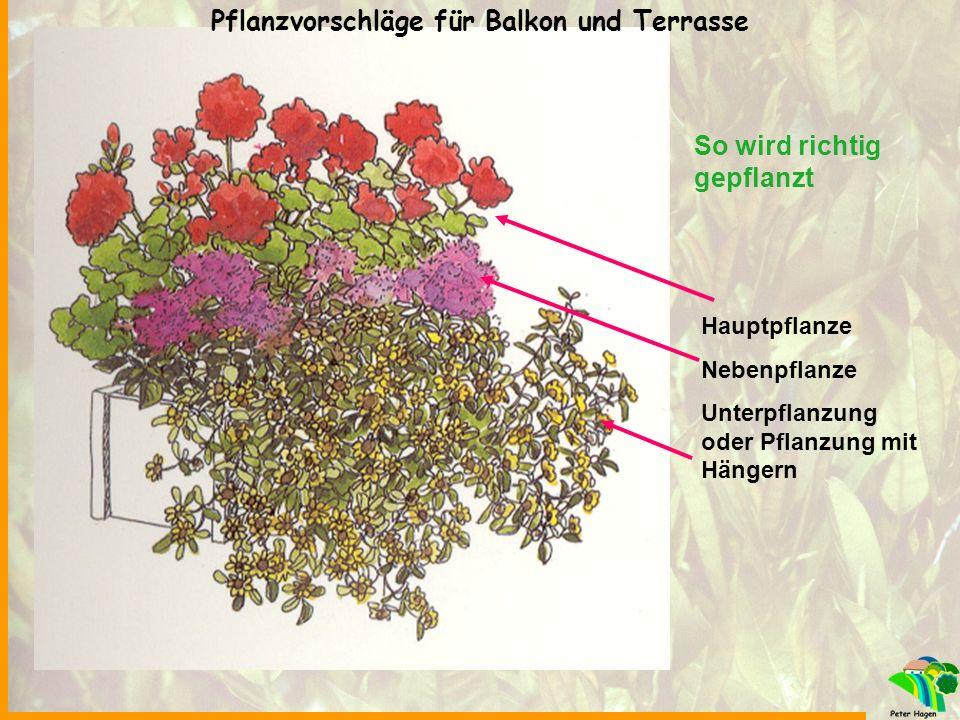 Pflanzvorschläge für Balkon und Terrasse