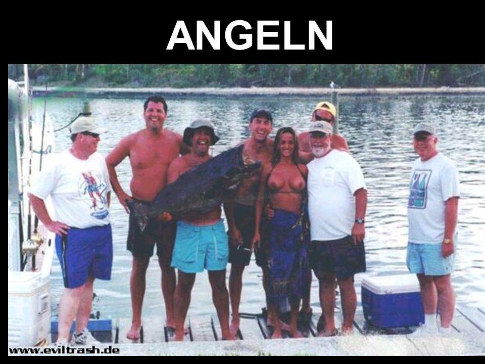 ANGELN 2