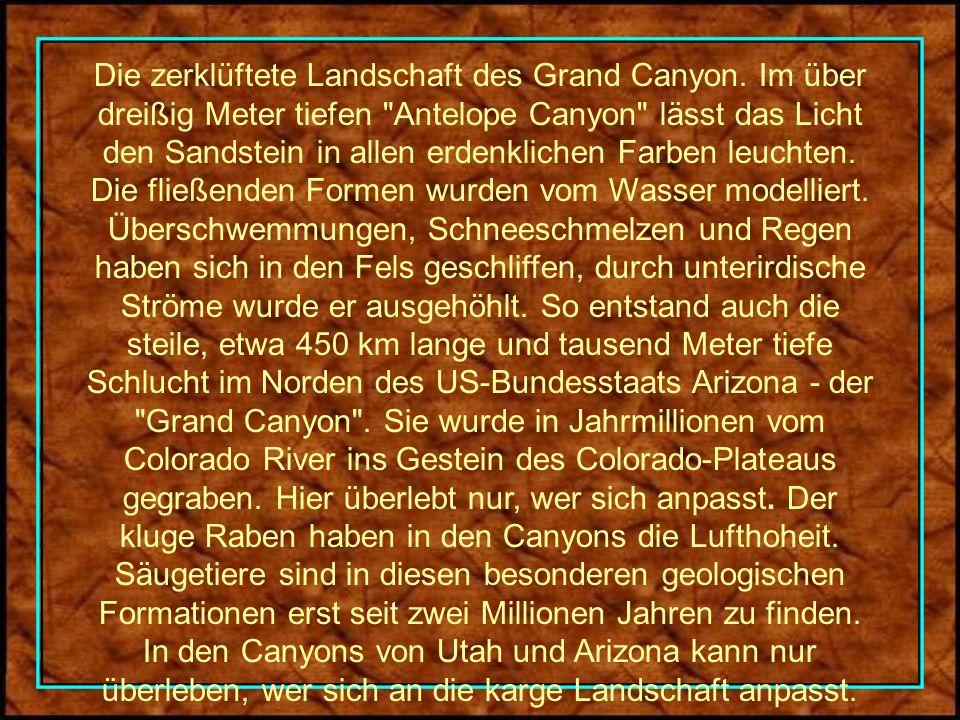 Die zerklüftete Landschaft des Grand Canyon