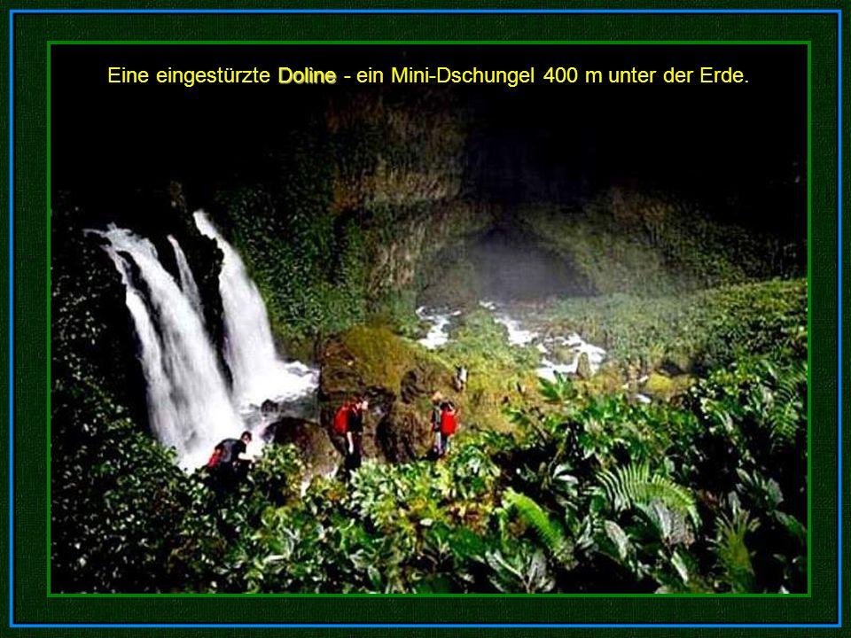 Eine eingestürzte Doline - ein Mini-Dschungel 400 m unter der Erde.