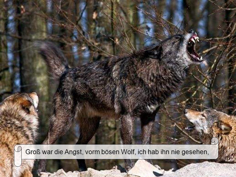 Groß war die Angst, vorm bösen Wolf, ich hab ihn nie gesehen,