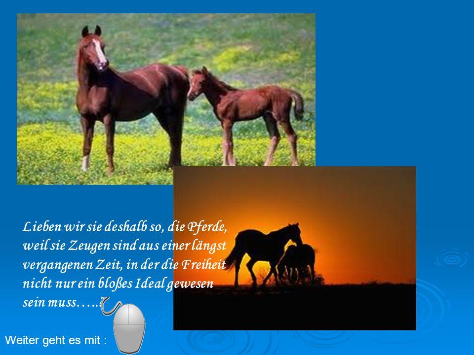 Lieben wir sie deshalb so, die Pferde, weil sie Zeugen sind aus einer längst vergangenen Zeit, in der die Freiheit nicht nur ein bloßes Ideal gewesen sein muss…..
