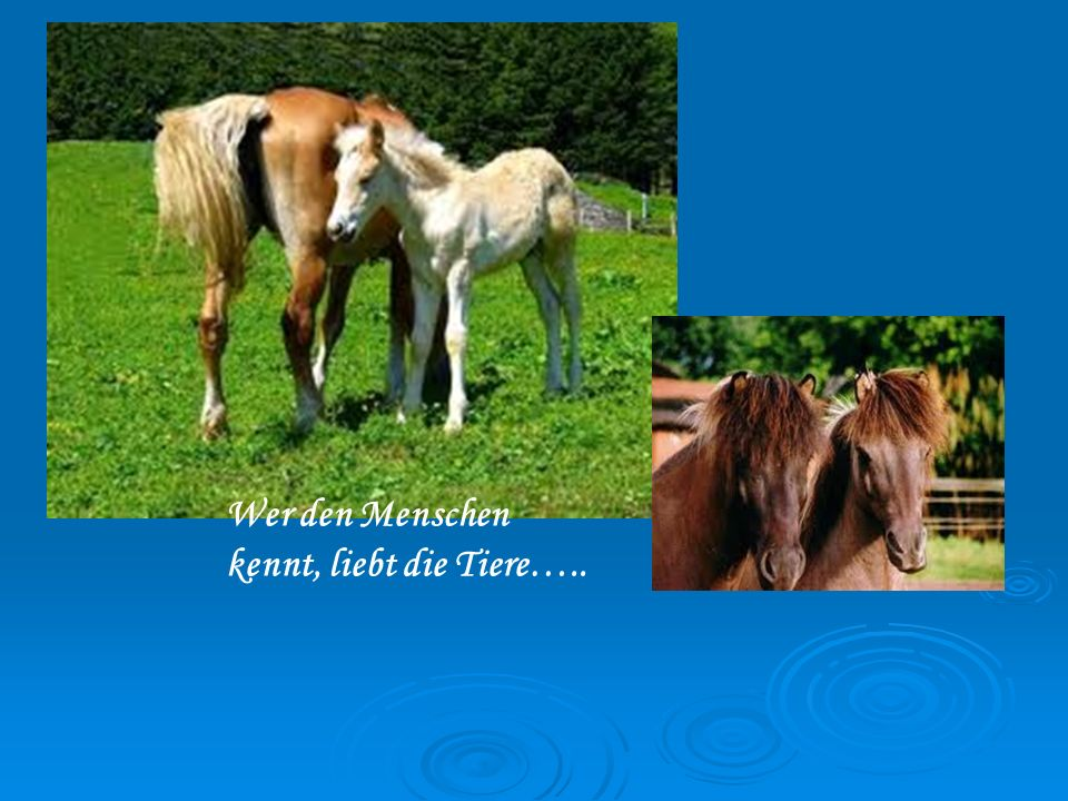 Wer den Menschen kennt, liebt die Tiere…..