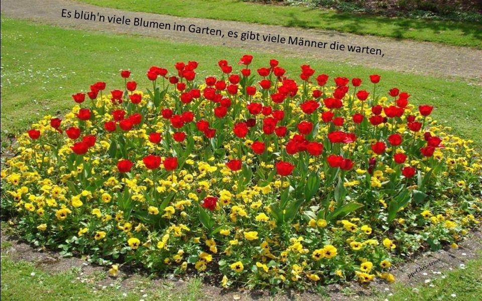 Es blüh n viele Blumen im Garten, es gibt viele Männer die warten,