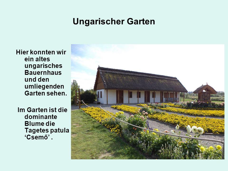 Ungarischer Garten Hier konnten wir ein altes ungarisches Bauernhaus und den umliegenden Garten sehen.