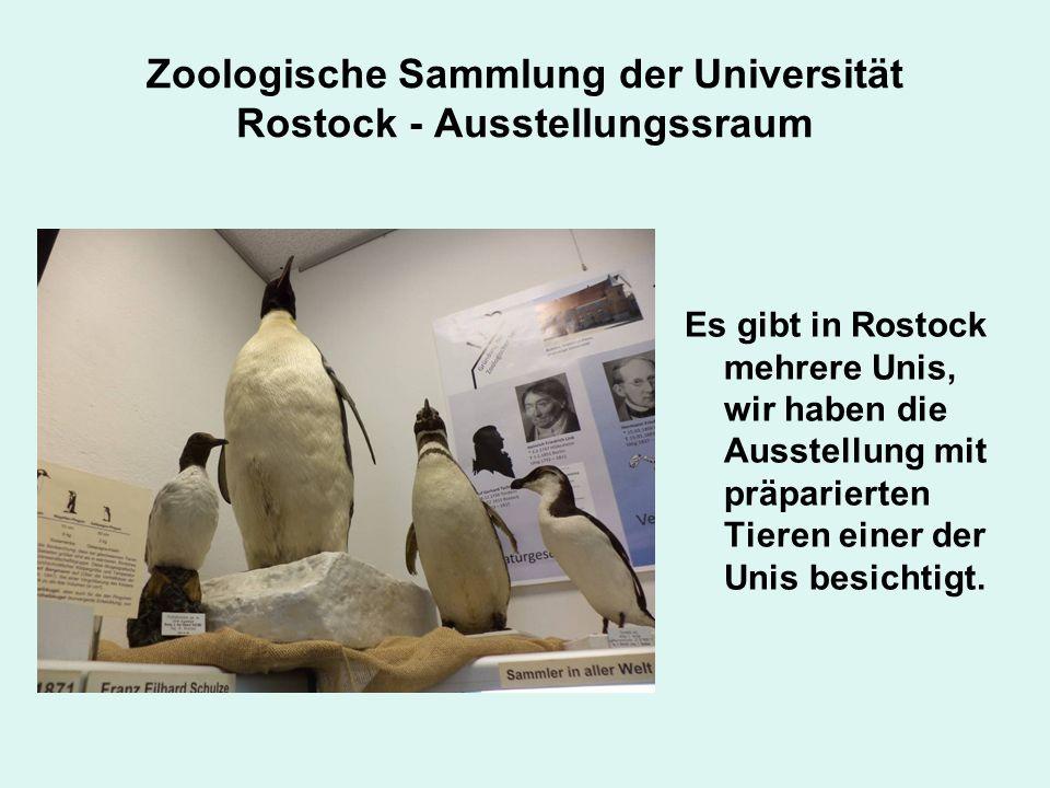 Zoologische Sammlung der Universität Rostock - Ausstellungssraum