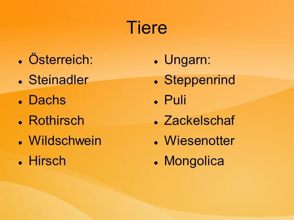 Tiere Österreich: Steinadler Dachs Rothirsch Wildschwein Hirsch