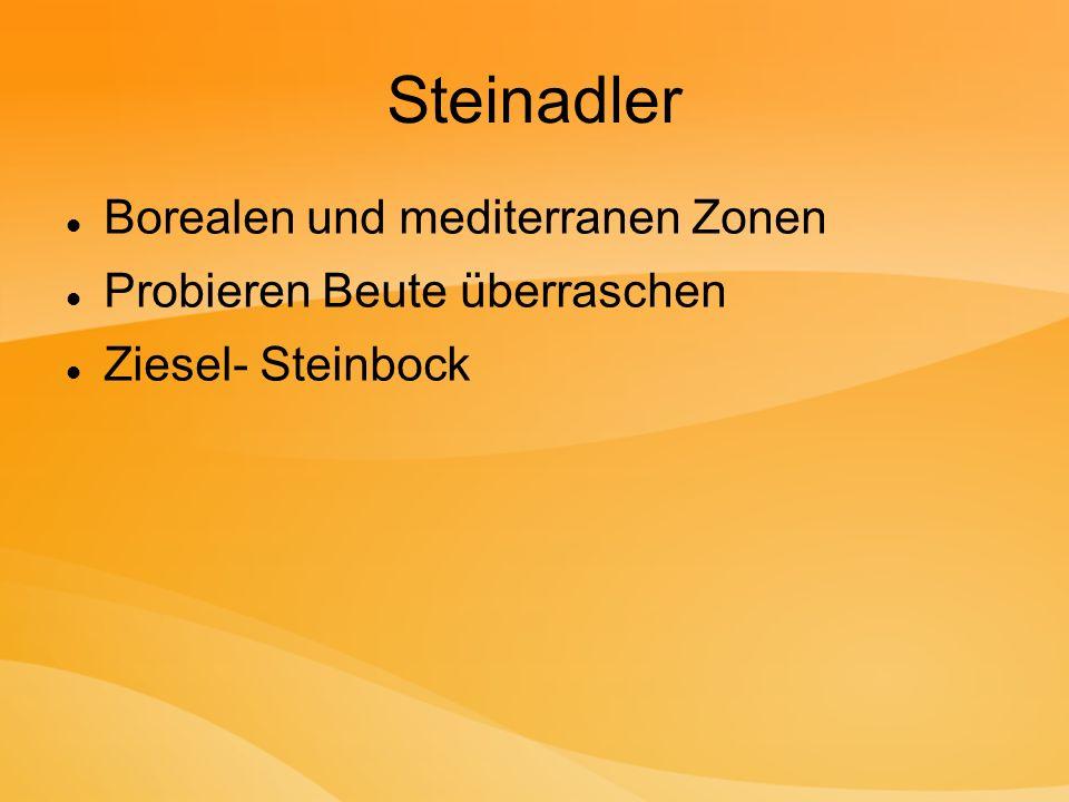 Steinadler Borealen und mediterranen Zonen Probieren Beute überraschen