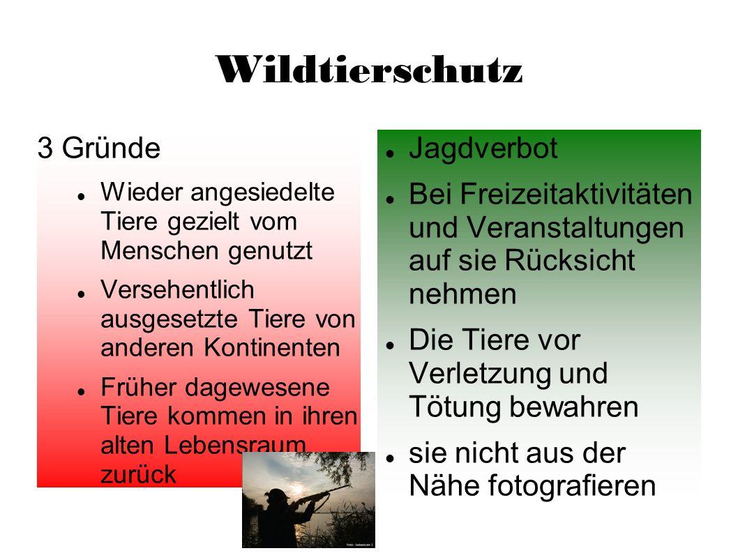 Wildtierschutz 3 Gründe Jagdverbot