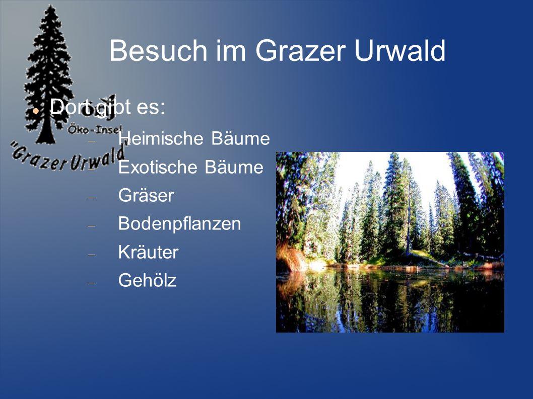 Besuch im Grazer Urwald