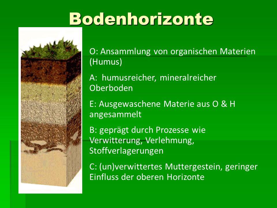 Bodenhorizonte O: Ansammlung von organischen Materien (Humus)