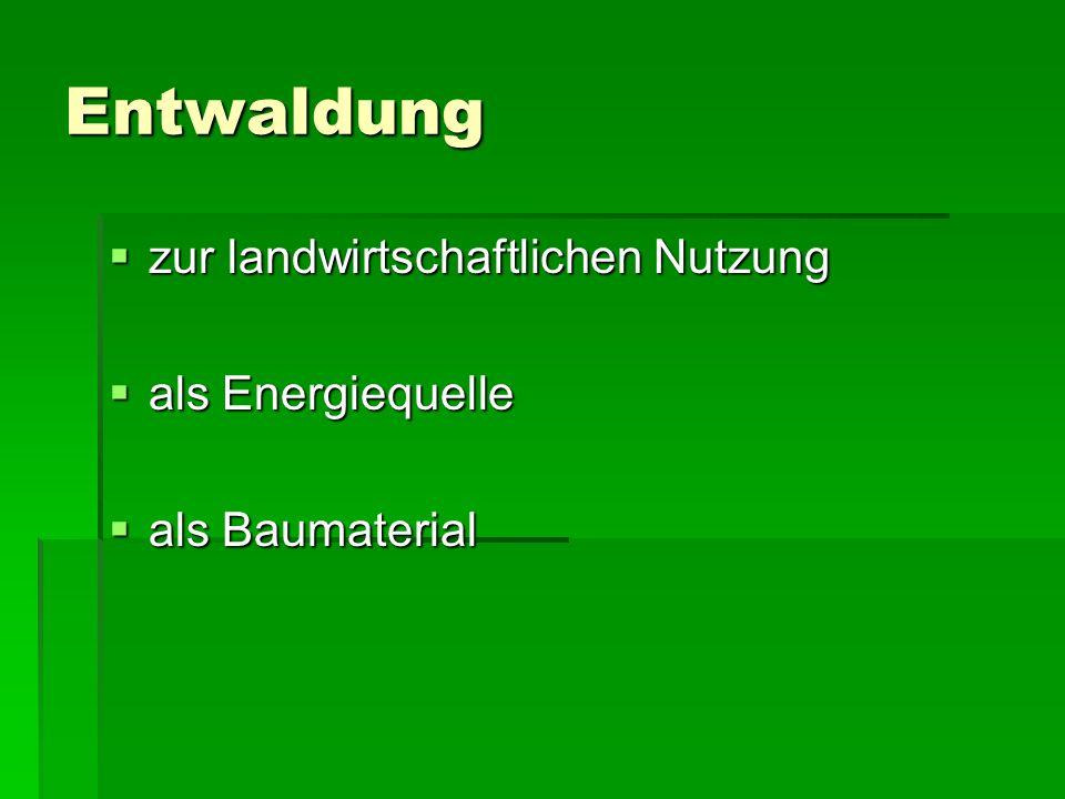 Entwaldung zur landwirtschaftlichen Nutzung als Energiequelle