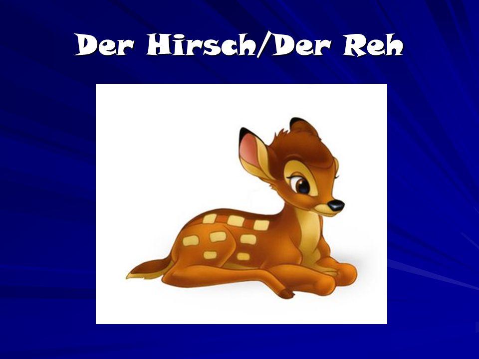 Der Hirsch/Der Reh