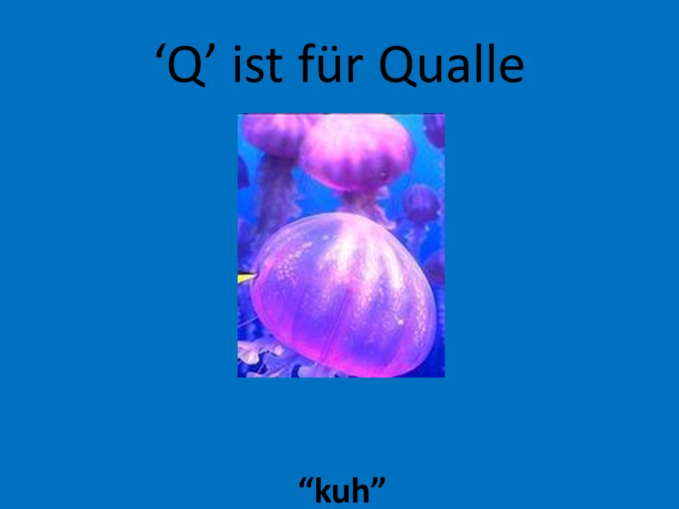 'Q' ist für Qualle kuh
