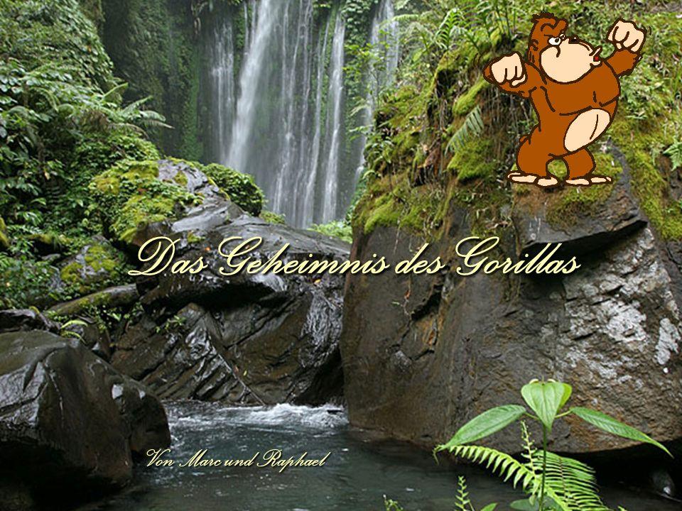 Das Geheimnis des Gorillas